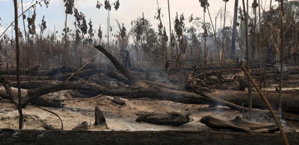 fotografia de madeiras queimadas, relevando o problema do desmatamento