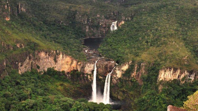 Plantas do cerrado atuam como uma imensa esponja, recarregando aquíferos que abastecem rios e reservatórios
